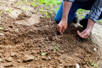 What is Organic Farming and do we need it?
