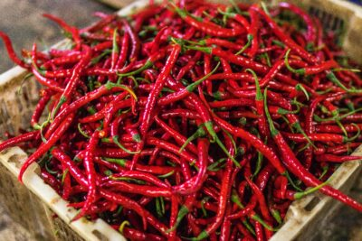 Best Practices to Grow Red Chilli: Climate, Soil & Harvesting Tips